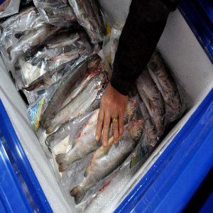طرح توجیهی فراوری و بسته بندی ماهی